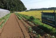 jimg-02-daiichiTsubasa