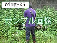 oimg-05-peanuts